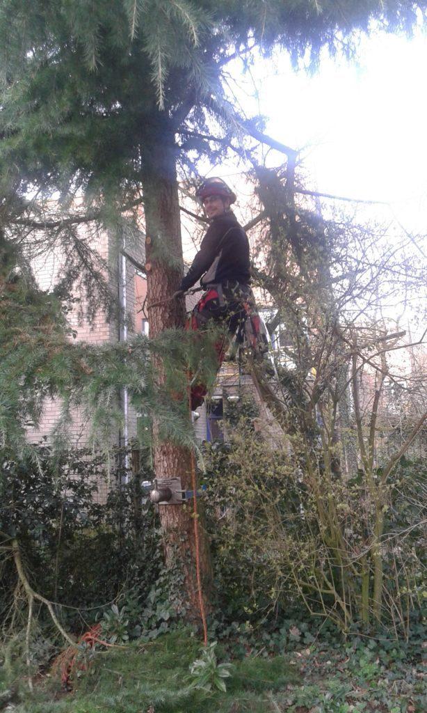 hoveniersbedrijf amersfoort bomen rooien